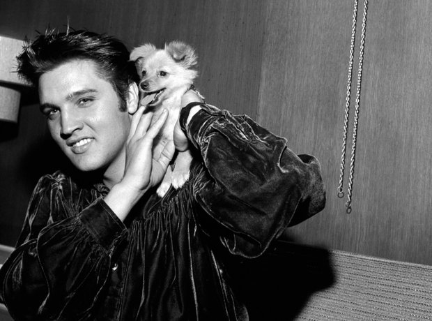 Elvis posing with dog in 1956